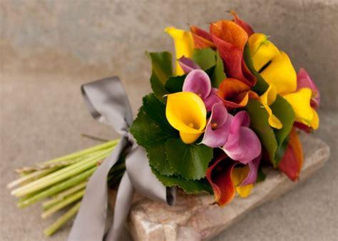 significato fiori calla calla fiore significato fiori fiore della calla