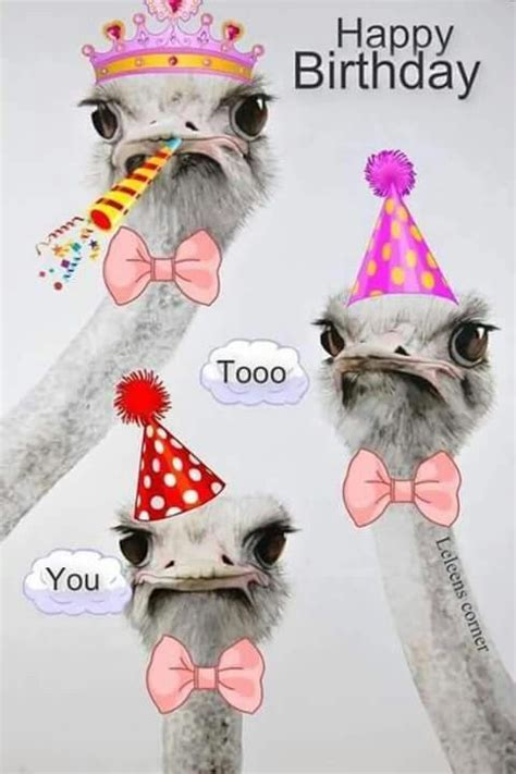 Ostrich Happy Birthday Quote Pictures, Photos, and Images