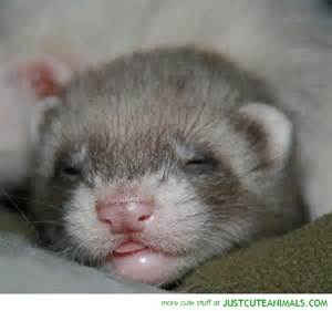 Cute baby animals sleeping related keywords amp suggestions cute baby