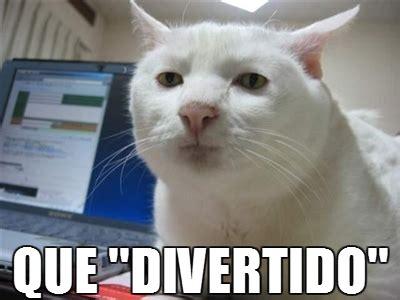 imagenes sarcasticas de gatos gato sarc 225 stico gatos chistosos imagenes chistosas
