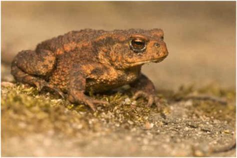 are toads poisonous to dogs are frogs poisonous to dogs