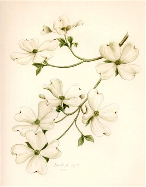 dogwood tattoo ideas dogwood is the tree that we planted in