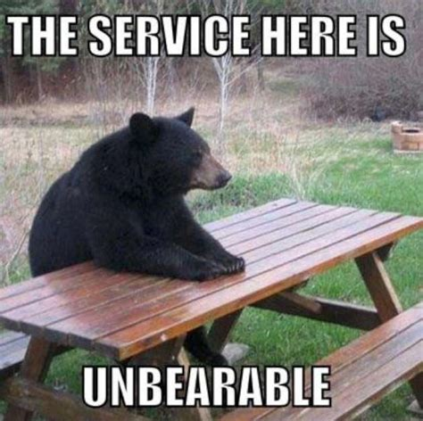Funny Bear Memes - really funny bear photo w630