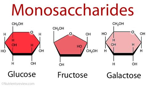 carbohydrates and glucose monosaccharides simple sugars definition list exles