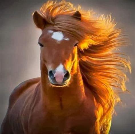 imagenes bonitas impactantes las mas impactantes fotos bonitas de caballos reales