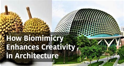 Traditional House Plans how biomimicry enhances creativity in architecture