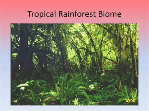 Ppt Savanna And Tropical Rainforest Biomes Powerpoint Rainforest Powerpoint