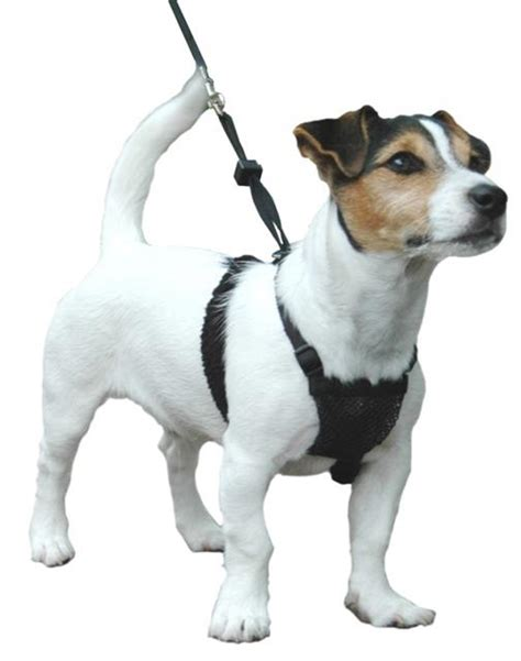 medium harness sporn non pull padded harness small medium large available ebay