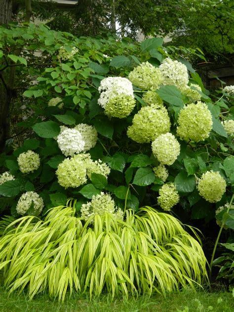 997 best shade garden plants images on pinterest plants shade garden plants and gardening