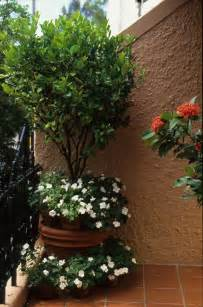 Small Trees For Patio Pots by Release Trees In Pots Bring Life To Courtyards And
