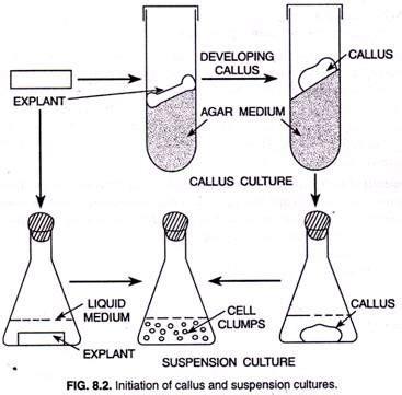 plant cell tissue and organ culture cell suspension et 248 jeblik i livet af rytteren suspension batch culture