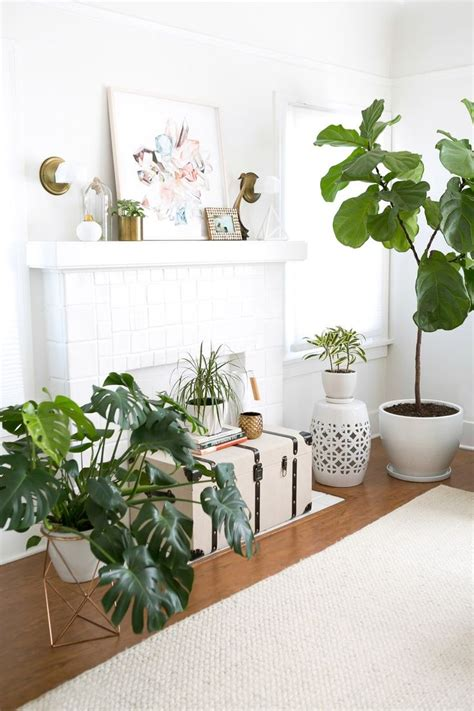 living room plants 25 best ideas about living room plants on pinterest living room indoor tree plants and