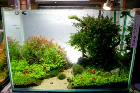 aquascaping tall tanks aquascaping world magazine tokyo aquarium event