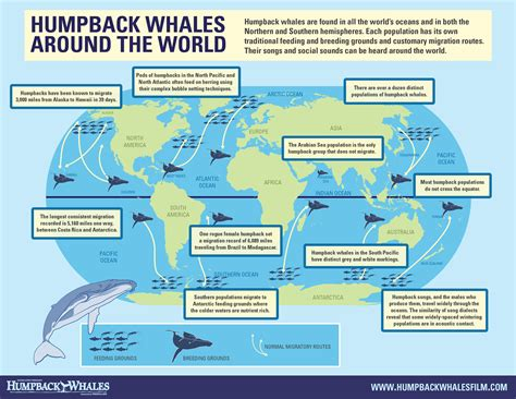 where s everybody going migration patterns and housing infographic humpback whales around the world one world