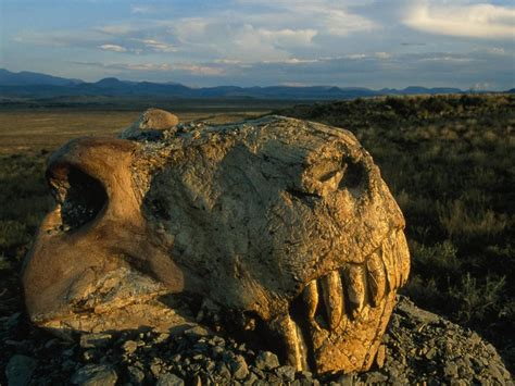 permian extinction information and facts