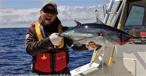 fishing boat oppor tuna ty gorge fly shop blog fly fishing for tuna oregon coast