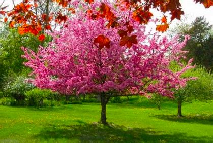 top small trees for landscaping small gardens photos
