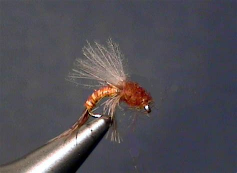 blue quill pattern fly fishing great smoky mountain park aquatic insect hatches
