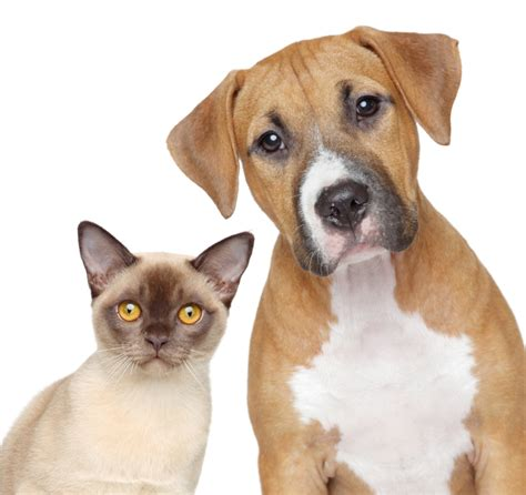 dogs cats aarp michigan humane society offer pet adoption discounts