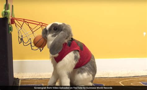 Bunny Record This Athletic Bunny Just Set A World Record Dunking