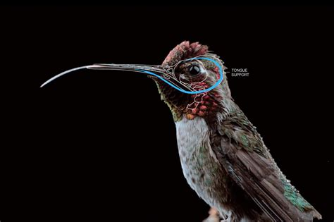 the science of hummingbirds