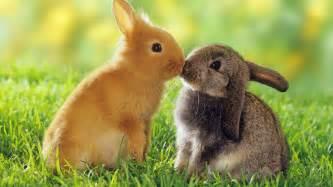 Plastic Rabbit Hutches For Sale Rabbit Supplies For Sale Cages For Sale Hutches Food