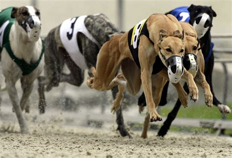 bonita springs track house panel approves at bonita springs greyhound track