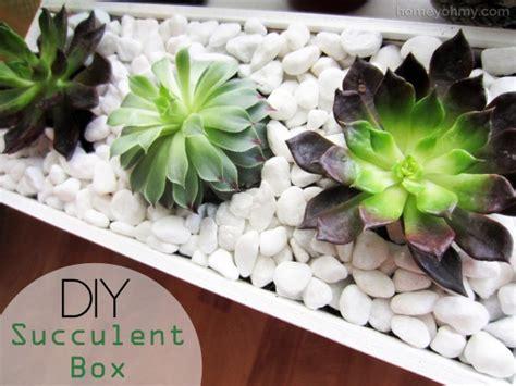 diy succulents diy succulent box