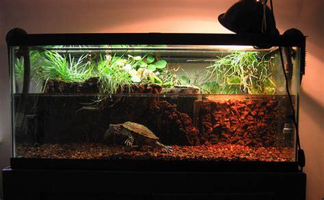 aquarium design for turtles red eared turtle red eared slider pet turtles