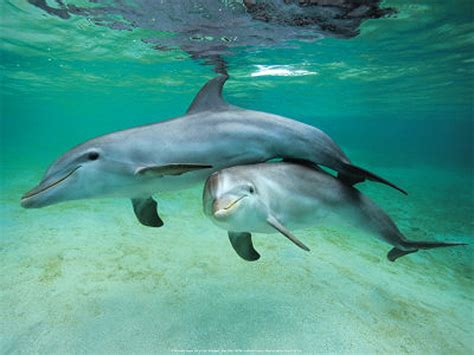 baby bottlenose dolphins baby animal zoo