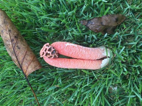 backyard mushrooms dogs mushrooms in yard edible best yard and garden design 2017