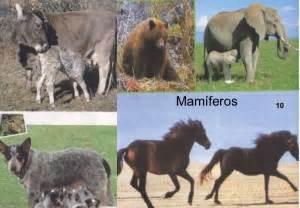 imagenes de animales vertebrados mamiferos reino animal vertebrados