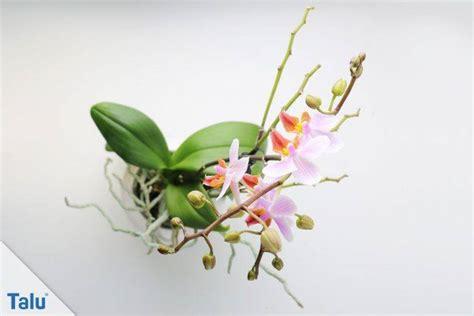 orchideen luftwurzeln abschneiden 5581 orchideen luftwurzeln abschneiden orchideen richtig