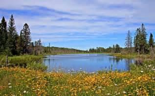 minnesota landscape minnesota landscape beaver pond flowers pixdaus