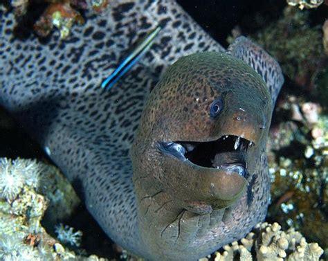 hewan laut  berbahaya  laut kita jaya