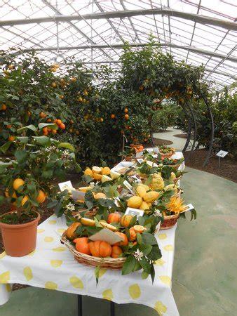 giardino degli agrumi hesperidarium il giardino degli agrumi pescia itali 235