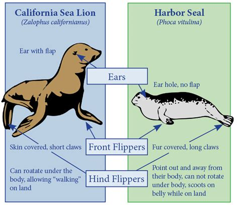 What Is The Difference Between Sealing And Expunging A Criminal Record Sea Vs Seal 搜尋 Animal Seal Sealion
