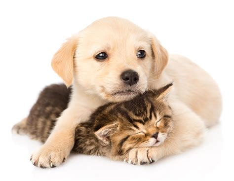 can puppies be around other dogs how much socialization does a golden retriever need europuppy