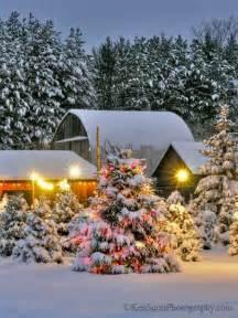 christmas tree farm christmas pinterest