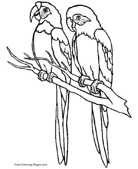 coloring pages of birds to print printable bird coloring pages parrot 01
