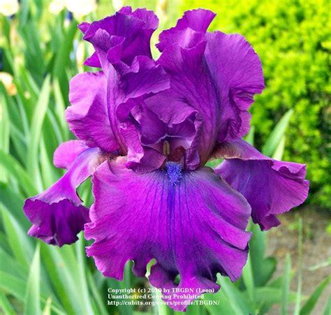 what mood is purple what mood is purple good color changing screen mood light