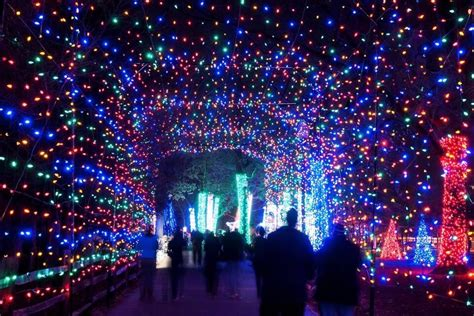 lights detroit zoo lights at the detroit zoo