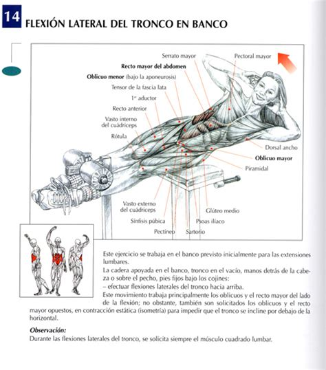 ejercicios en banco de abdominales ejercicios abdominales fotos musculaci 243 n y pesas