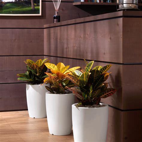 piante da ufficio purifica purificare l dell ufficio con le giuste piante il