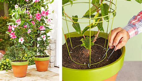 Plant Pot With Trellis flowerpot trellis