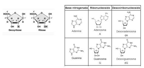 cuantas clases de cadenas carbonadas hay los nucleotidos monografias