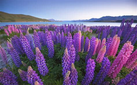 flower wallpaper nz great lakes around the world rough guides