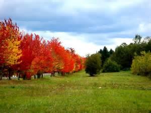 panoramio photo beautiful fall colors 2007