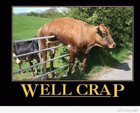 Funny Cow Memes - funny cow stuck in a fence
