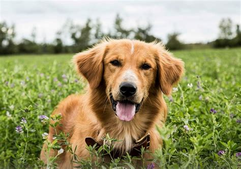 dogs purpose abuse a s purpose reeling from allegations of animal abuse